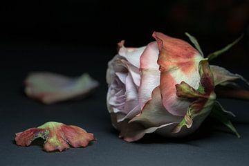 Urbexrose von Nancy Lamers