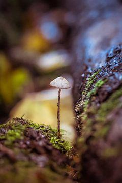 Pilz zwischen zwei Baumstämmen. von Brigitte Blaauw