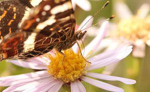 Vlinder op bloem van Sanne Willemsen