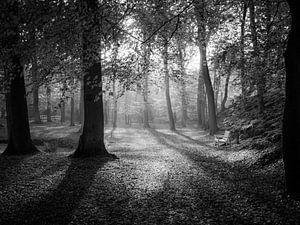 Autumn Forest B/W