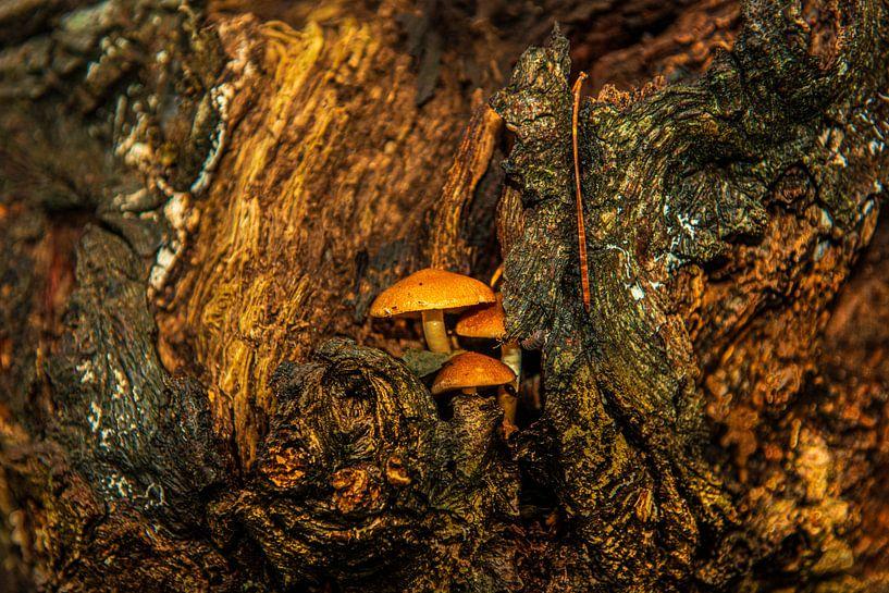 Paddestoelen in het Bos van Brian Morgan
