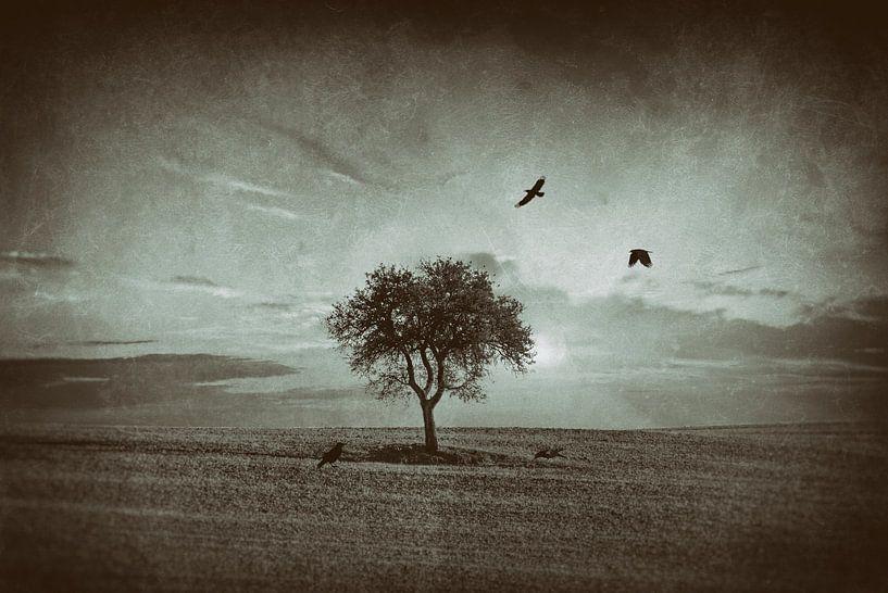 Solitude boom van Peter Bolman