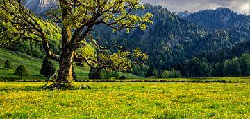 Oude boom in de lente van Andreas Föll
