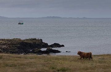 Schotse hooglander aan zee van Eddie Meijer