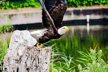 Birdshow von Wouter Bakker