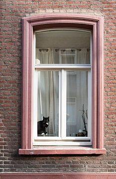 chat sur Joep Deumes