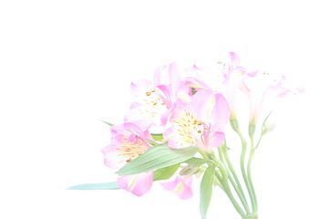 Romantische Blumen von Hannelore
