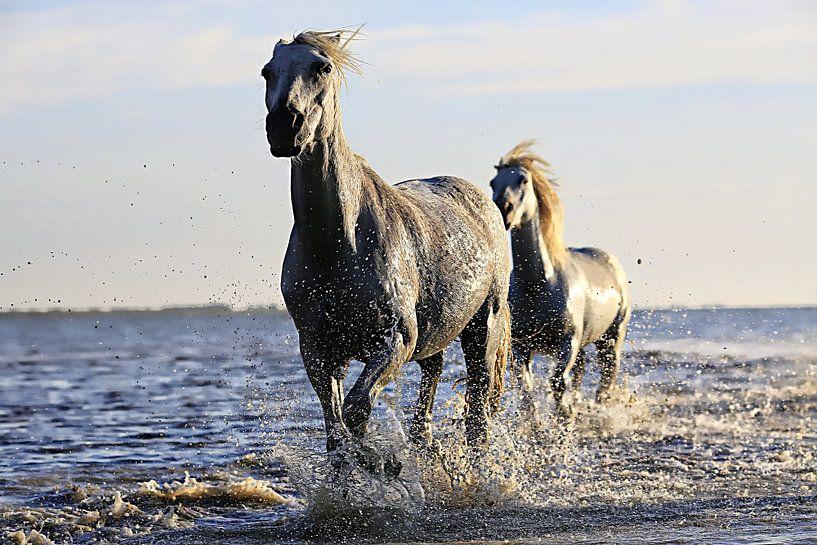Zwei Pferde im Wasser von Atelier Liesjes