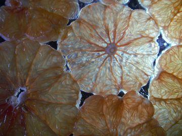 grapefruit van onder belicht en close-up,grapefruit viewed from underneath and close-upGrapefruit vo
