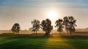 Zon achter bomen