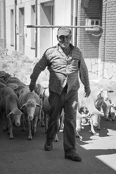 Herder van Christophe Castillon