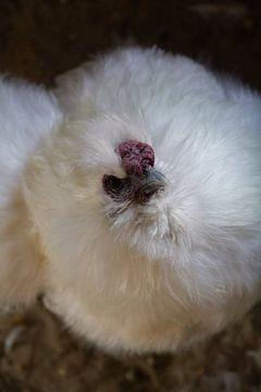 Weißen Huhn von Stefan Zwijsen