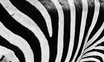 Close-up van het patroon van strepen van een Zebra in zwart-wit van Sjoerd van der Wal