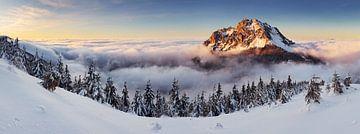 Golden Peak, Tomas Sereda von 1x