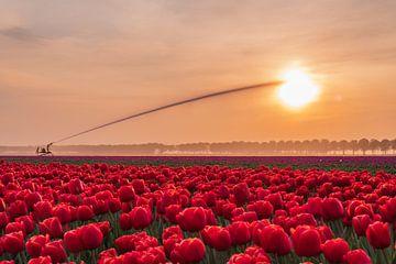 Die Sonne auslöschen von Karin Riethoven