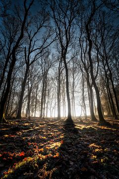 Mistig in het Bos, Staand van Jeffrey Van Zandbeek