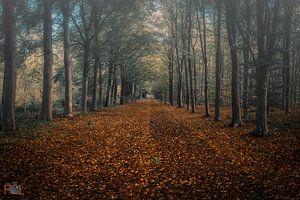 Beginnende Herfstkleuren Nederland van Arnold Loorbach Photography