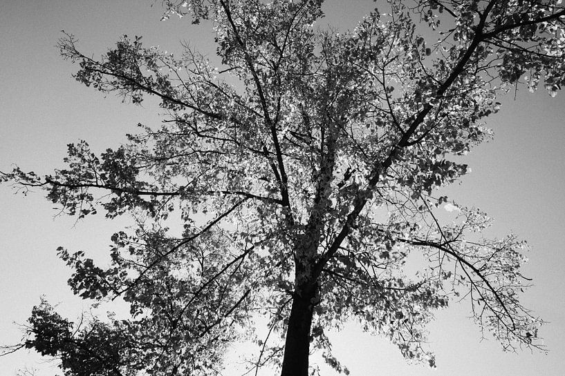 Het begin van de herfst van Christiaan Krouwels