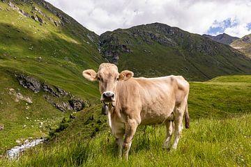 Kuh auf der Weide in der Schweiz von Werner Dieterich