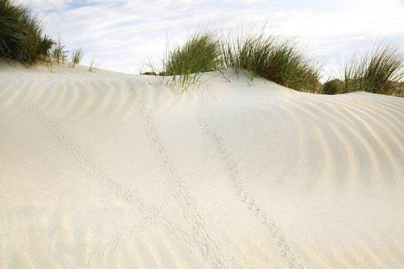 Sporen in het zand van Monique van Genderen (in2pictures.nl fotografie)
