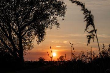 Zonsondergang in de Ooijpolder vlakbij Nijmegen met het silhouet van een boom. van Rianne Groenveld