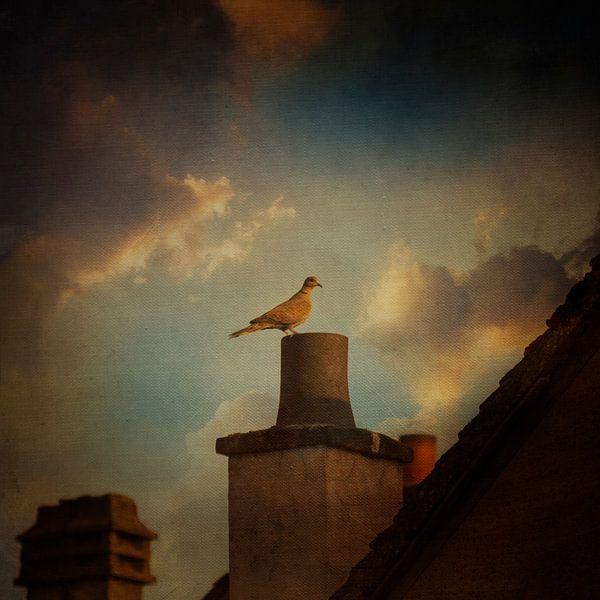 Duif op het dak van Dirk Wüstenhagen