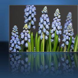 Blauwe Druifjes Reflectie van Bob de Bruin