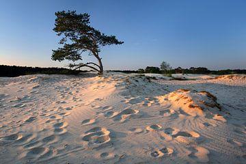 Bomen en duinen V van Mark Leeman