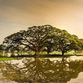 Zonsopgang in Sri Lanka van Ruurd Dankloff