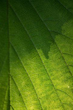 Het blad van een boom van Roosmarijn Jongstra