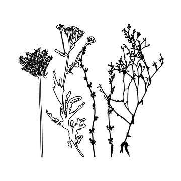 Botanische illustratie met planten, wilde bloemen en grassen 5.  Zwart wit.