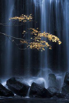 Gele Herfst, Yuki Yatsushima van 1x