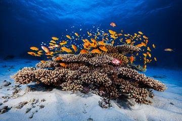 Marine Life, Barathieu Gabriel van 1x