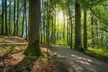Waldweg im Frühling von Martin Wasilewski