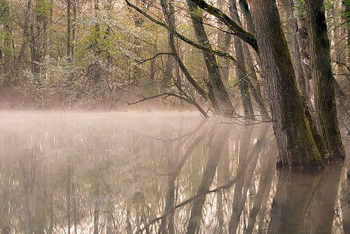 Sunrise and fog van Davy Sleijster