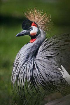 wichtiger Kronenkranich steht groß vor einem Hintergrund aus Grün, ein eleganter afrikanischer Vogel von Michael Semenov