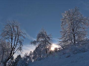 Un paysage hivernal de rêve sur le Jura souabe avec des arbres couverts de neige sur Timon Schneider