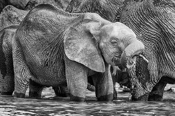 Junger Elefant am Wasser Loch im Schwarz und Weiß von Chris Stenger