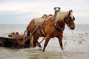 Paard in het water met wagen.