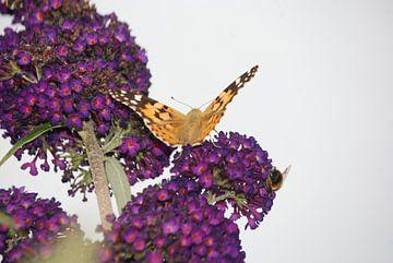 Vlinder in de rust van Riek Muijen