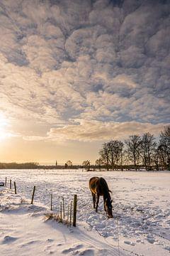 Snowy Wiese mit Pferd in weichen warmen Licht bei Sonnenaufgang von Dafne Vos