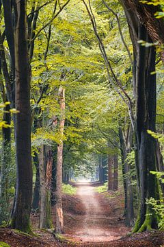 Speulderbos - Weg zwischen den Giganten von Koen Boelrijk Photography