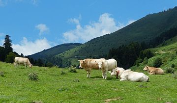 Koeien in de Franse Pyreneeën van Gonnie van Hove