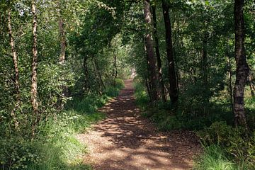 Typische niederländische Wälder