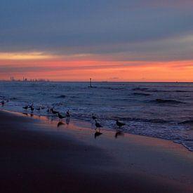 Seagulls  sur Jon Houkes