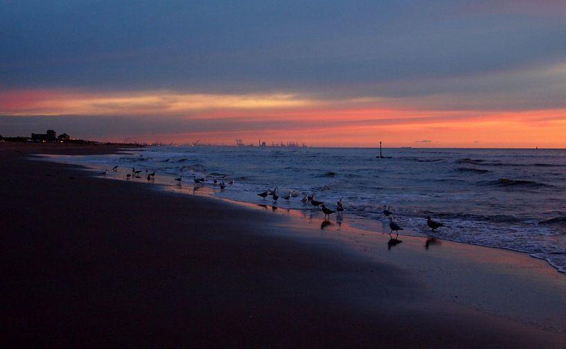 Seagulls  van Jon Houkes