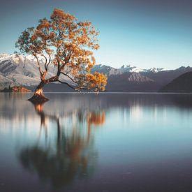 Frailty (Wanaka Tree Nieuw Zeeland) van Thom Brouwer