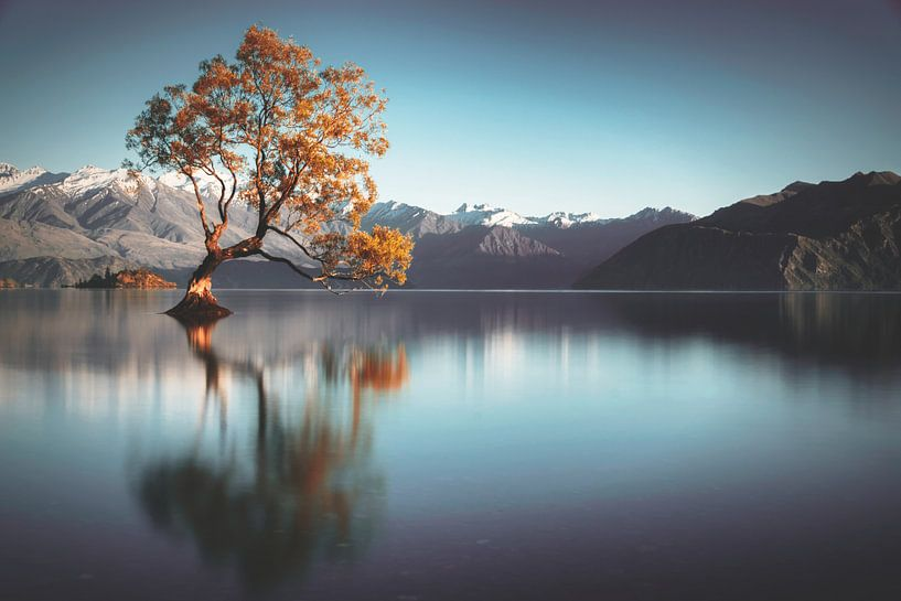 Frailty - Lake Wanaka von Thom Brouwer