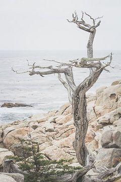 Einsamer Baum an der Westküste Nordamerikas von Chantal Kielman