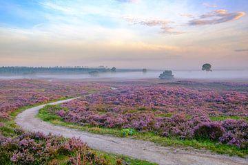 Pfad durch blühende Heidekrautpflanzen in einer Heidelandschaft bei Sonnenaufgang von Sjoerd van der Wal